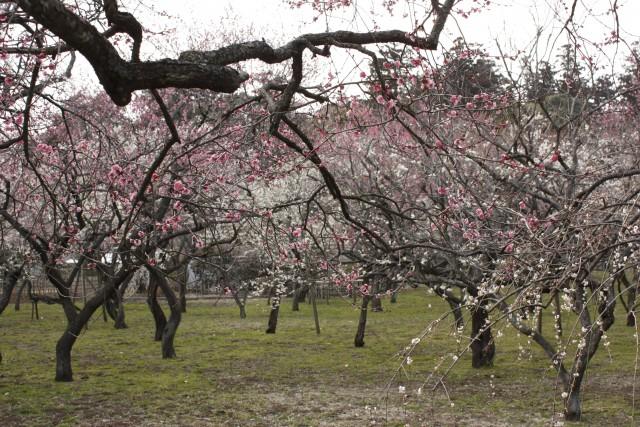 plum-trees-my-design-week-top-10-things-to-do-in-japan-1plum-trees-my-design-week-top-10-things-to-do-in-japan-1