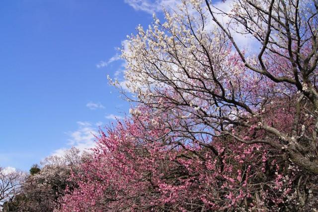 plum-trees-my-design-week-top-10-things-to-do-in-japan-2