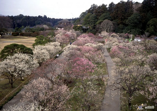 plum-trees-my-design-week-top-10-things-to-do-in-japanplum-trees-my-design-week-top-10-things-to-do-in-japan